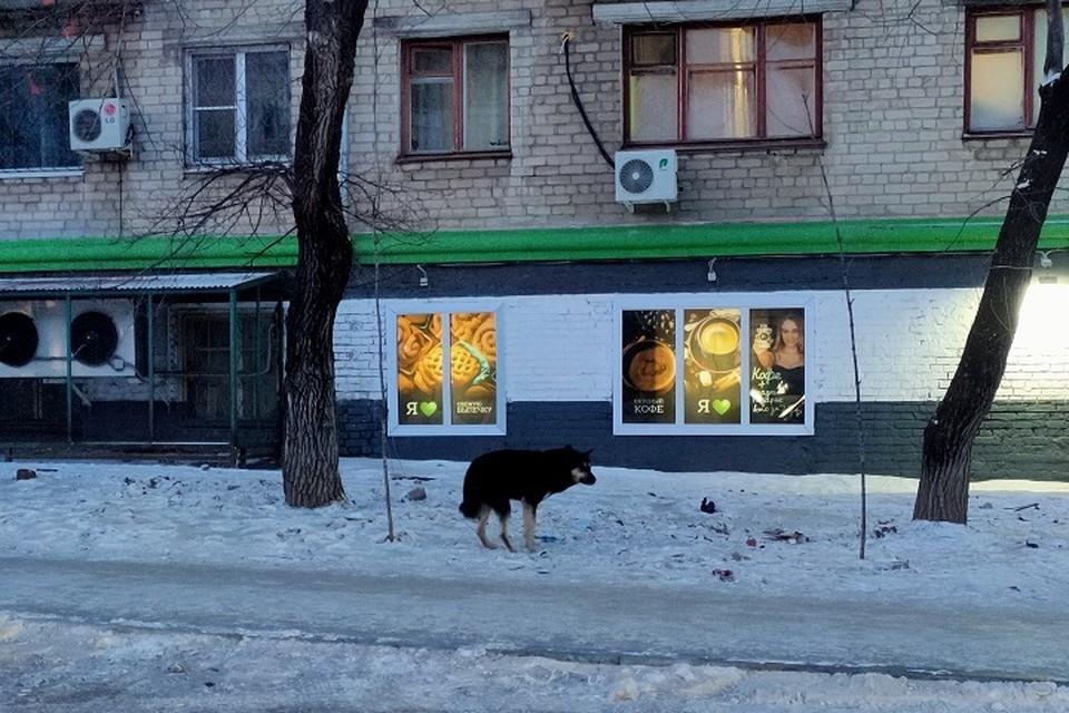 Проблемой отстрела собак занялась прокуратура в Комсомольске-на-Амуре