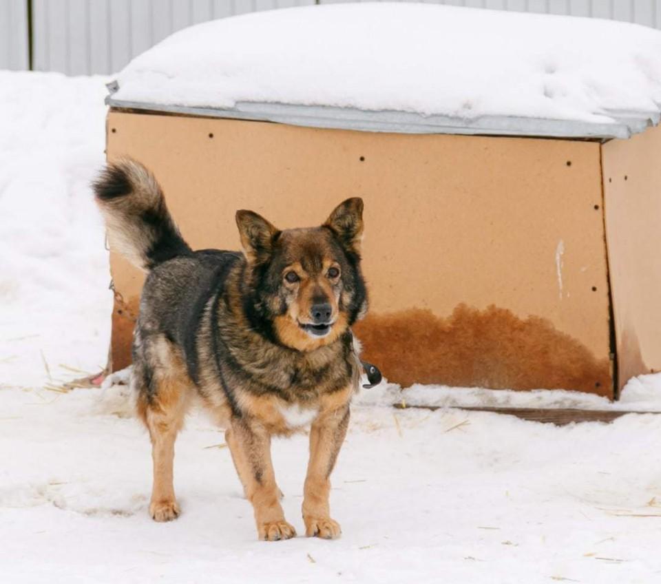 В приюте также сообщили, что все собаки, которых возвращают в места отлова, не представляют опасности для людей.