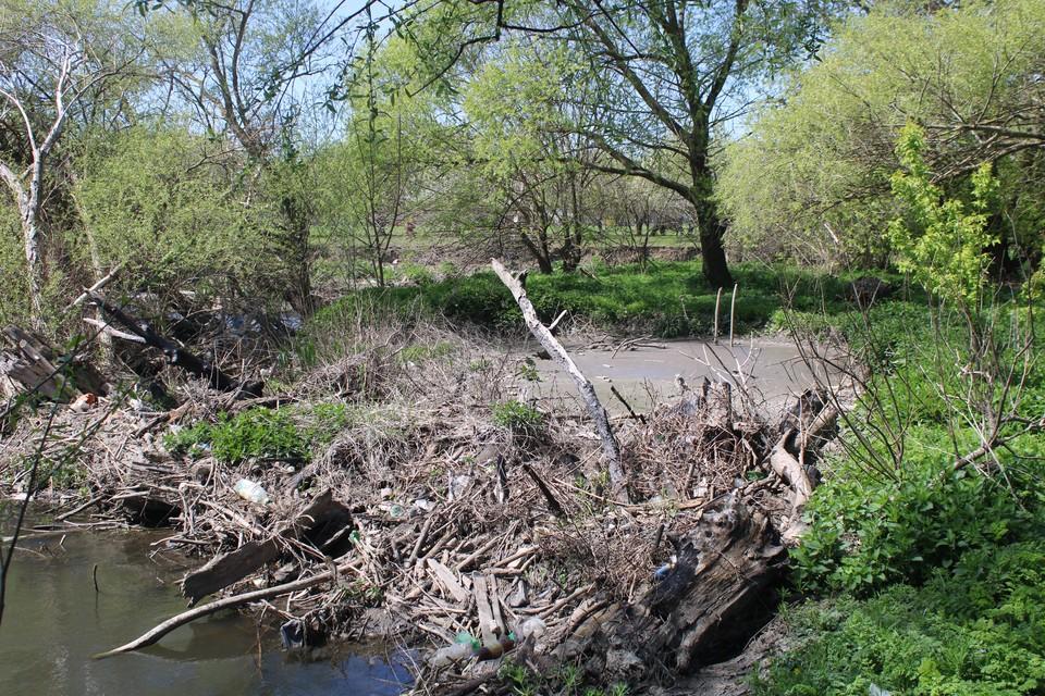 Речка забита корягами и мусором.