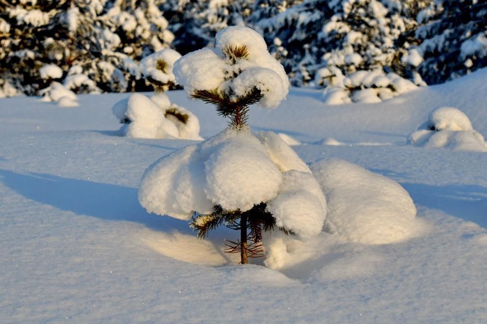 Погода все также дарит Заполярью морозы.