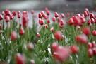 Весны ждать рано: синоптики рассказали, каким будет начало марта в Краснодарском крае