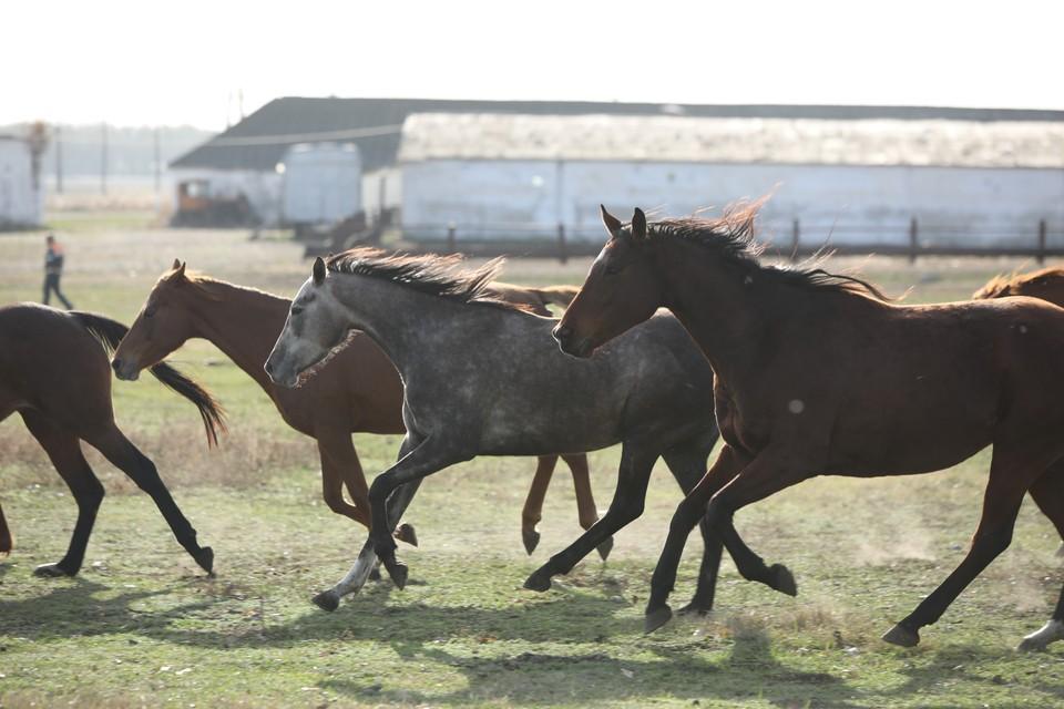 Лошадь сбежала с ипподрома в Москве и устроила скачки по шоссе