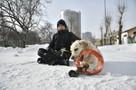 «Хочу быть ближе к папе»: в Екатеринбурге 11-летний школьник гуляет с собаками, чтобы купить квартиру в Минске