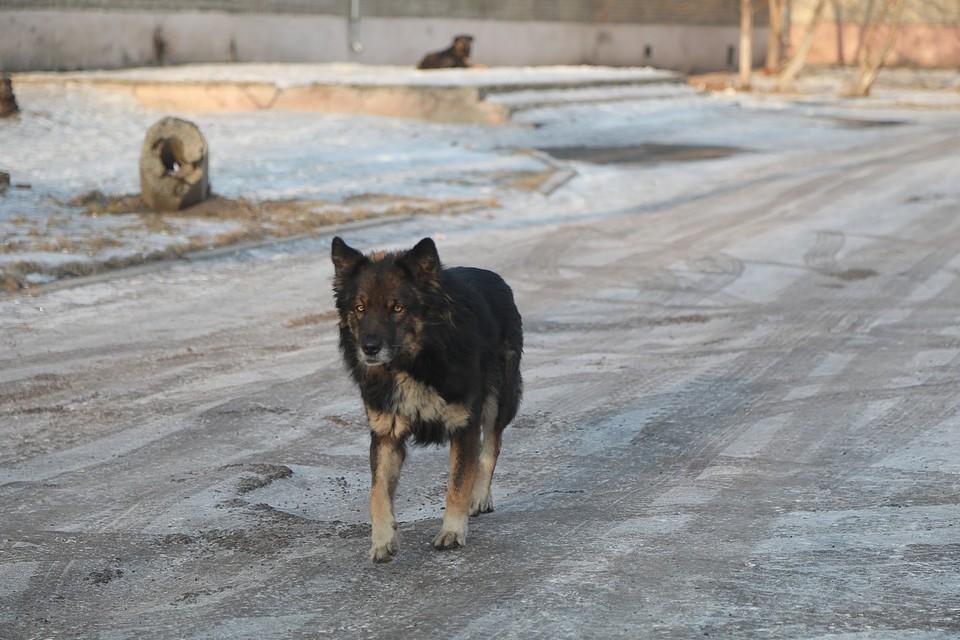 В Туве собаки насмерть загрызли женщину