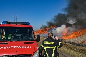 Для борьбы с новой напастью в Германии устраивают рукотворные пожары