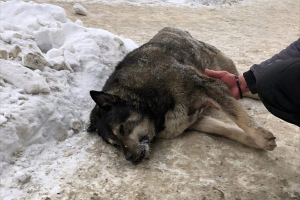 Собаку по кличке Толстушка знал весь Гордеевский пятачок.