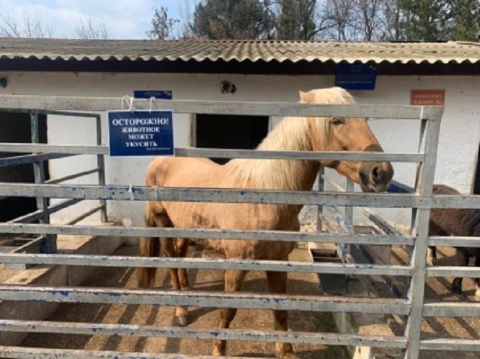 Лошадь откусила девочке палец, когда та ее кормила. Фото: Следком по РК и Севастополю
