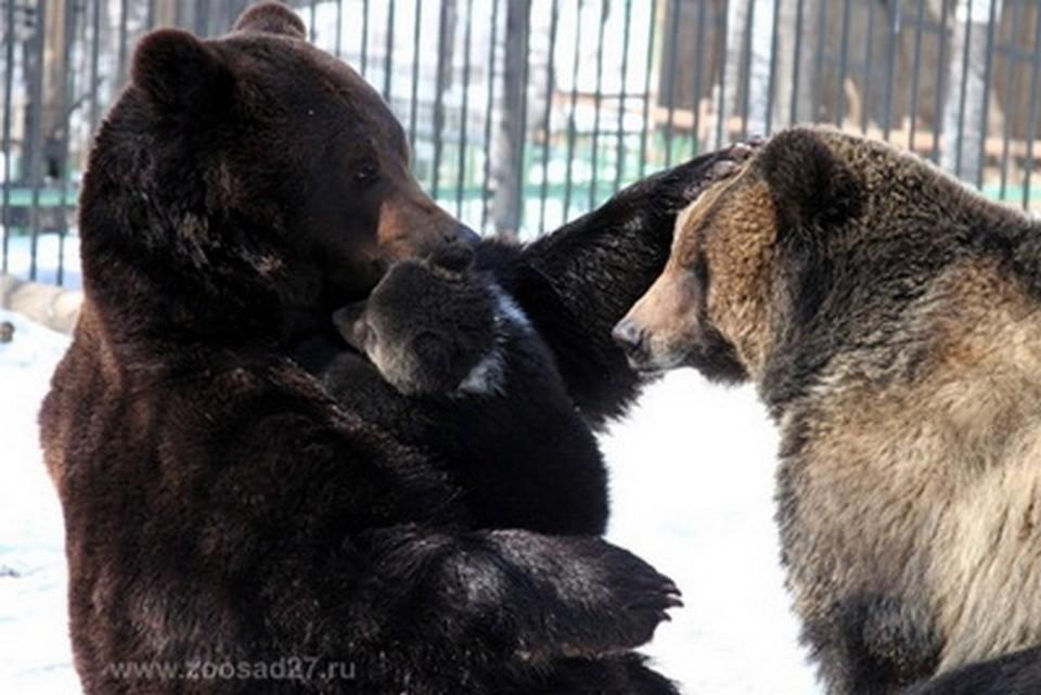Пятисотграммовое чудо природы: медведица Маша из зоосада в Хабаровске родила медвежонка
