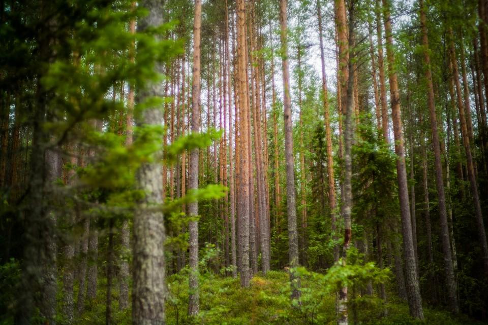 На сегодняшний день Белгородская область занимает второе место в российском рейтинге экологической устойчивости.