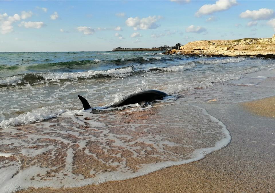 Телефоны экстренной помощи морским млекопитающим (также для сообщений о погибших животных): +7 (978) 032-68-52 +7 (916) 409-01-48.