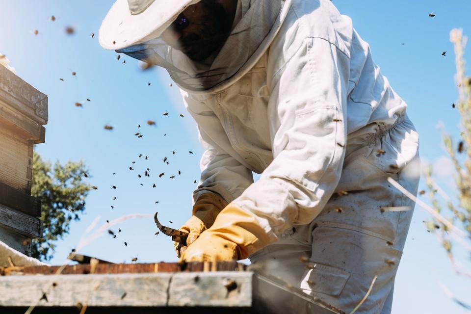 «Умный» улей, который будет оповещать пасечника о количестве меда или о неблагополучии в пчелином семействе