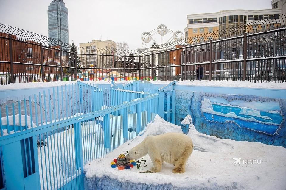 Сейчас белые медведи живут в вольере советских времен, который не соответствует современным нормам.