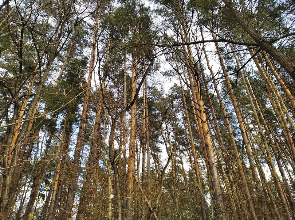 Жечь костры в лесу запрещено