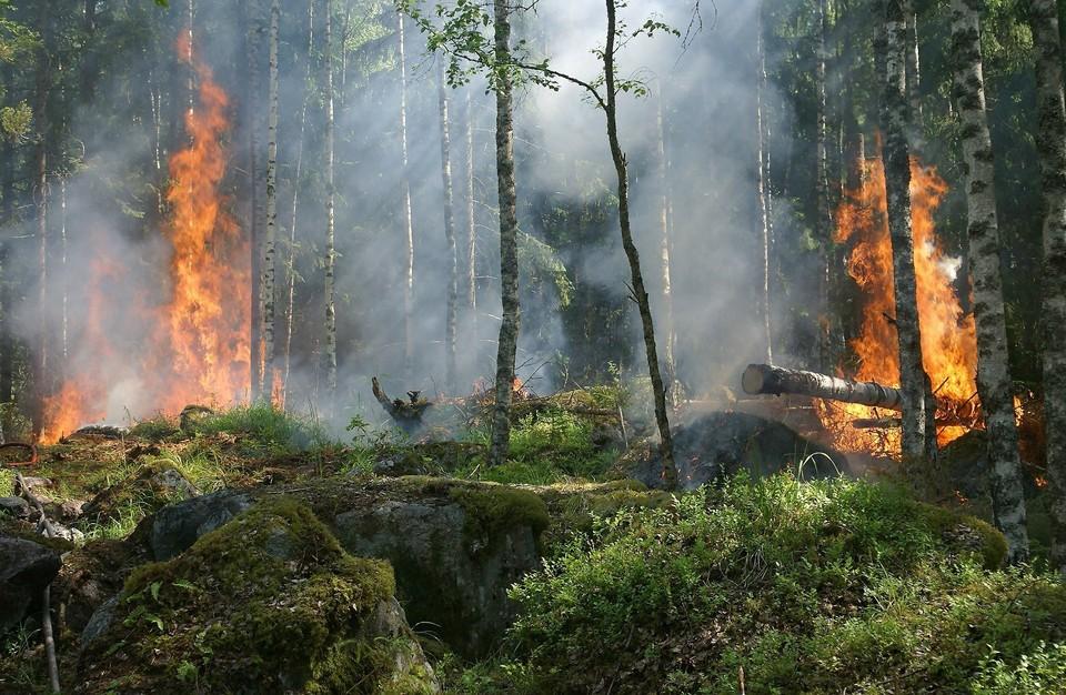 Пожароопасный период будет действовать с 19 апреля в Удмуртии