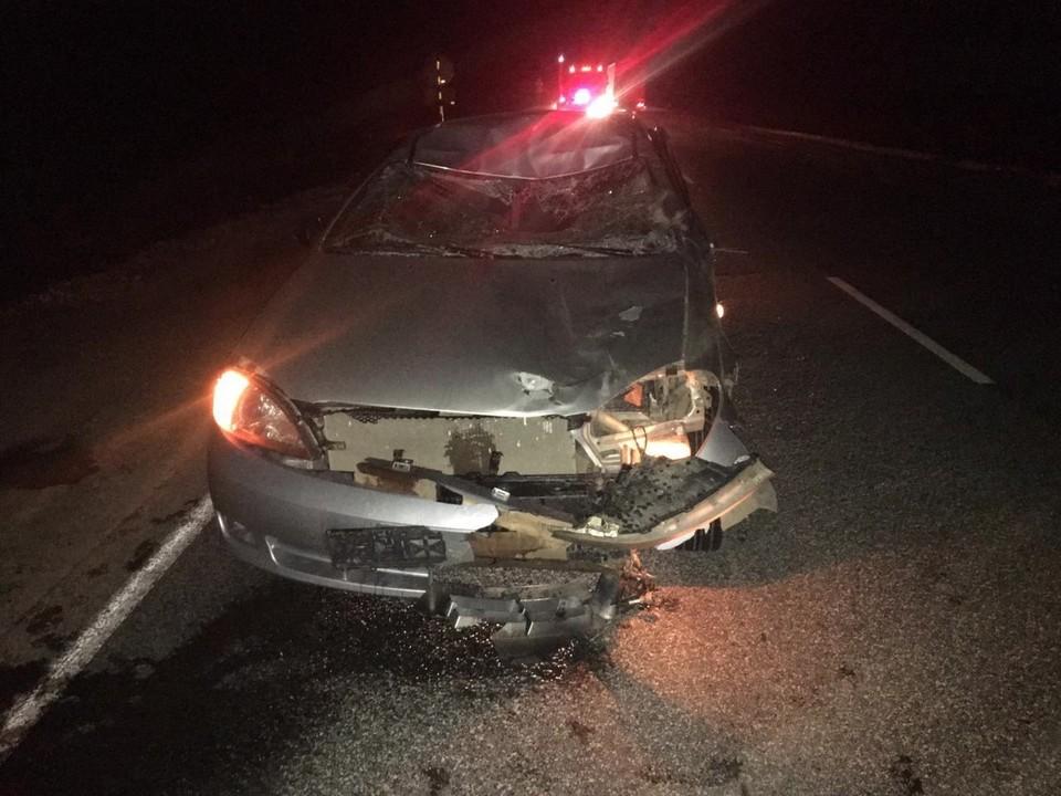 17-летний подросток попал в больницу из-за столкновения машины с лосем на трассе «Ижевск-Ува»