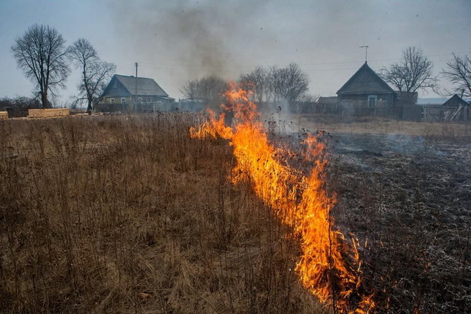 Огонь с сухой растительности может перекинуться на жилые дома и постройки. Фото МЧС ДНР