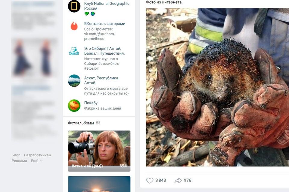 Скриншот со страницы vk.com/svetlana_kazina
