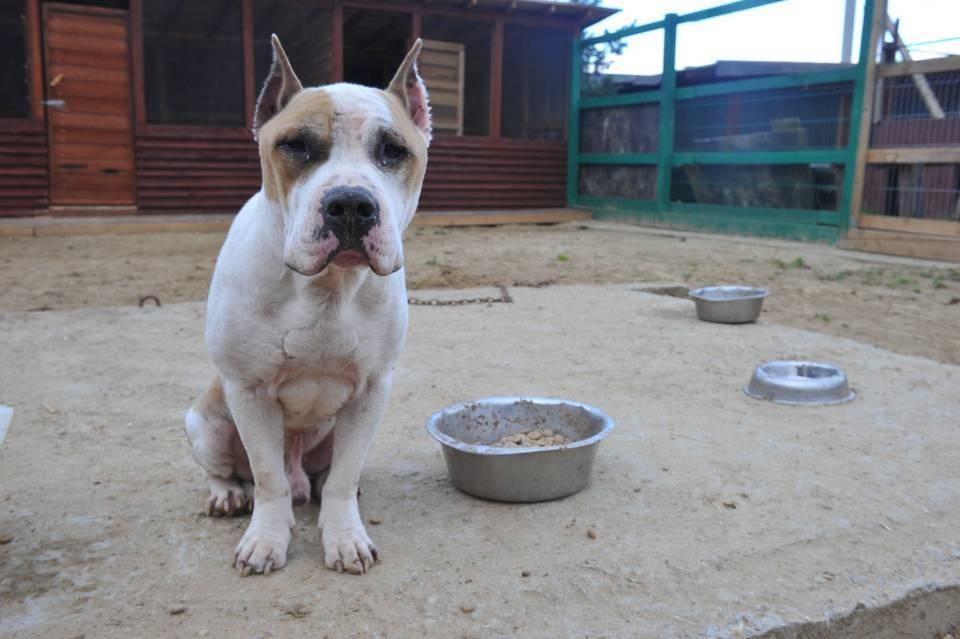 Собака живет при сетевом магазине, и на нее в последнее время стали жаловаться.