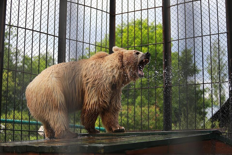 В национальном парке «Ергаки» разрешили отстрелить пятерых медведей