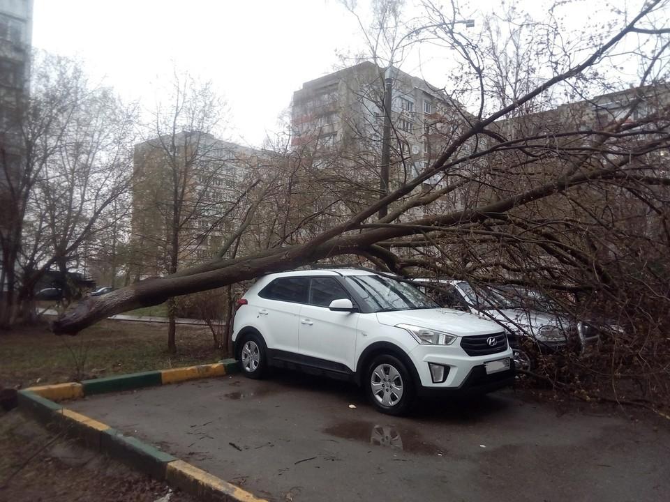На улице Тропинина дерево упало прямо на машины.