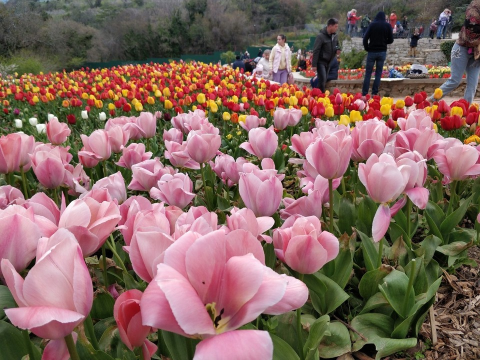В начале мая еще будет не поздно посетить Парад тюльпанов в Никитском ботаническом саду