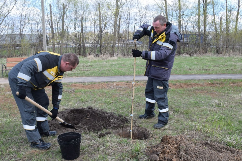 Саженцы дуба высадили в Турлатове работники Рязанской НПК.