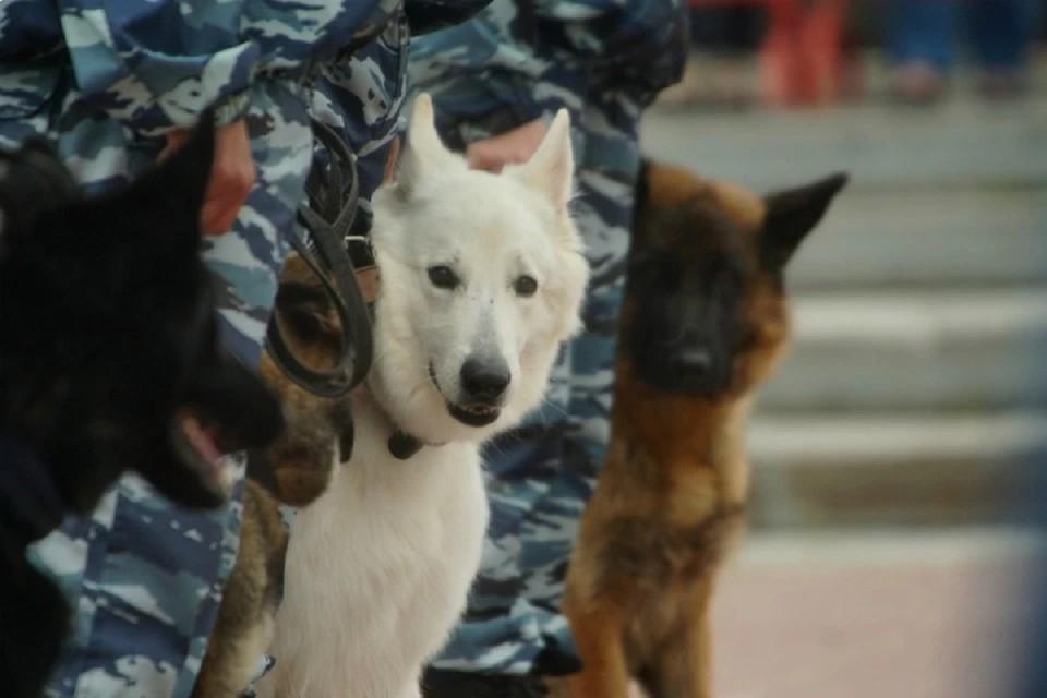 Для отслуживших собак подыскивают новый дом и ответственных хозяев.