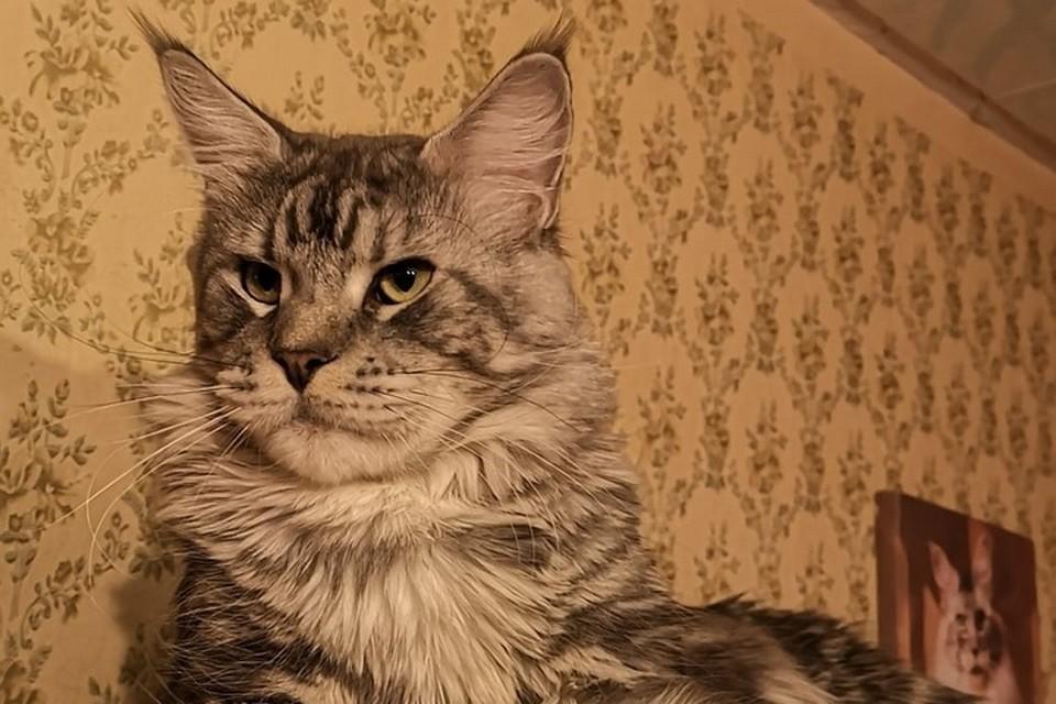 Коту поставили предварительный страшный диагноз: «Вирусный перитонит кошек» (FIP)
