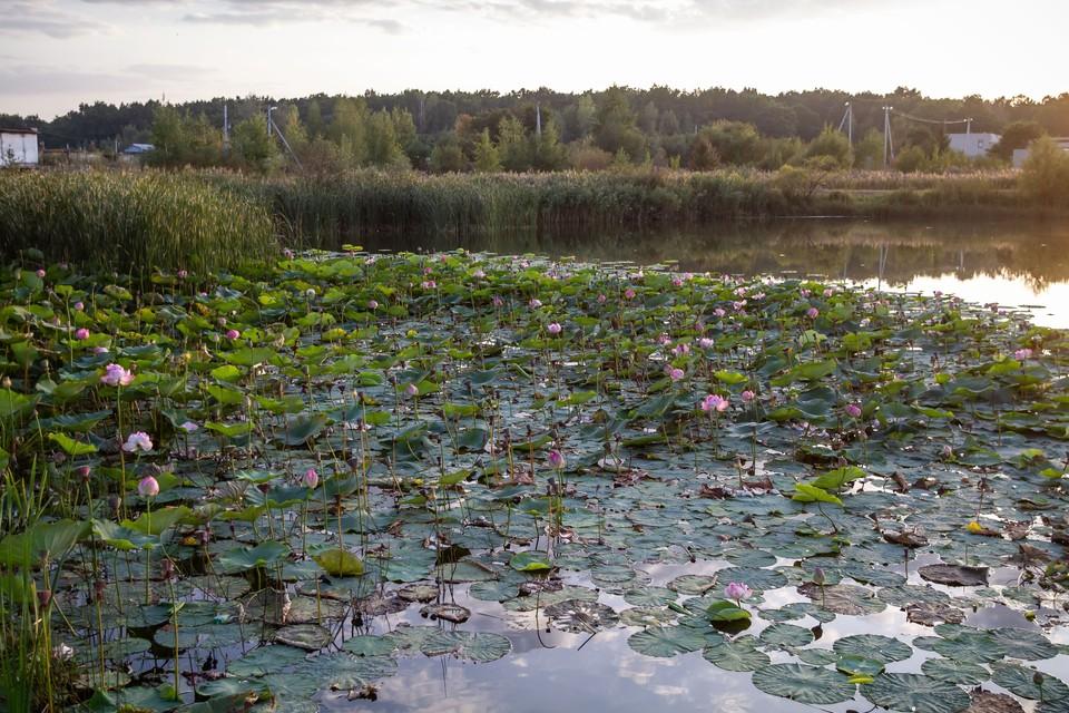 В Курской области множество мест для отдыха