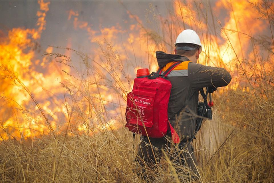 На всей территории края объявлен особый противопожарный режим. Фото Денис Нагаев.