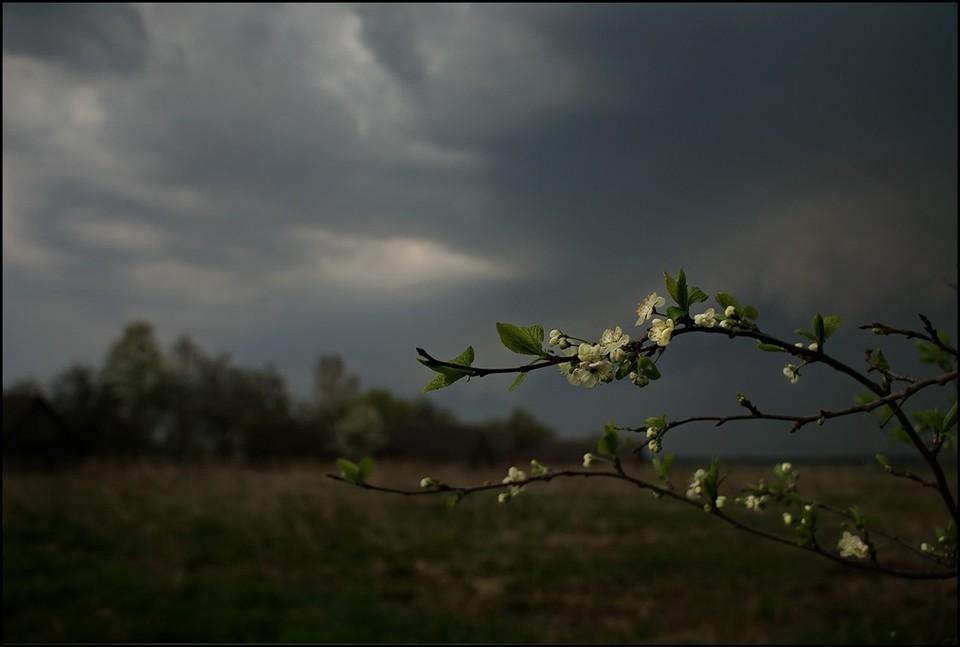 В течение дня возможен дождь