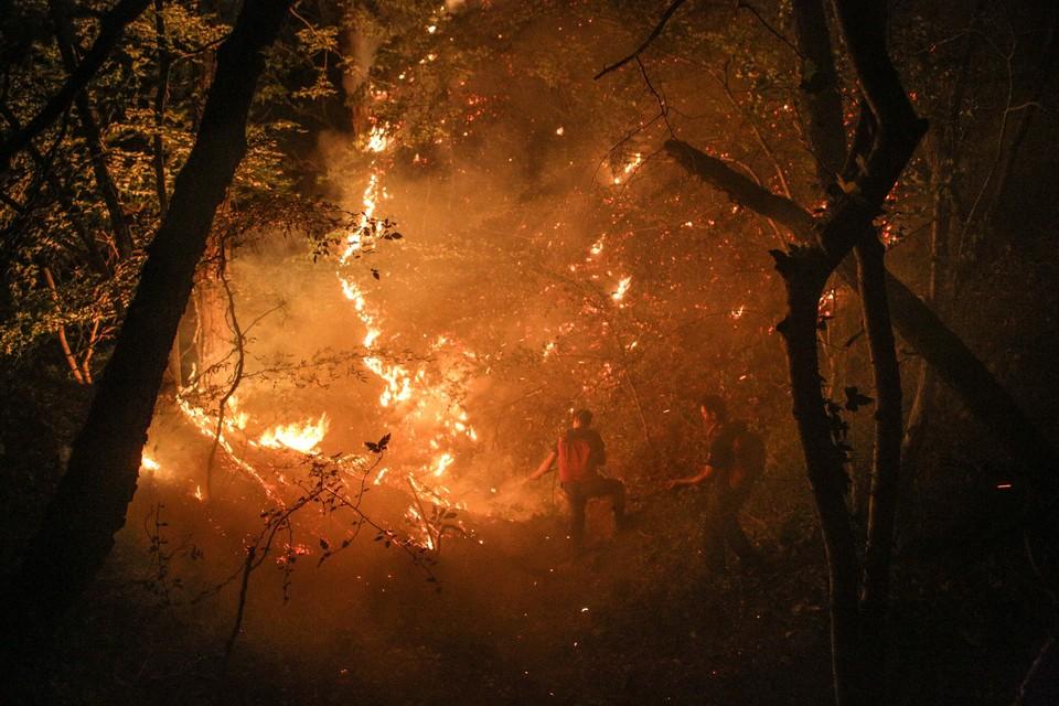 Ранее за сообщения о виновниках лесных пожаров платили 2 тыс. рублей
