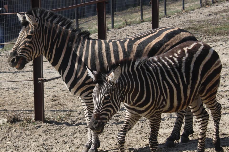Фото: МАУ «Пензенский зоопарк»