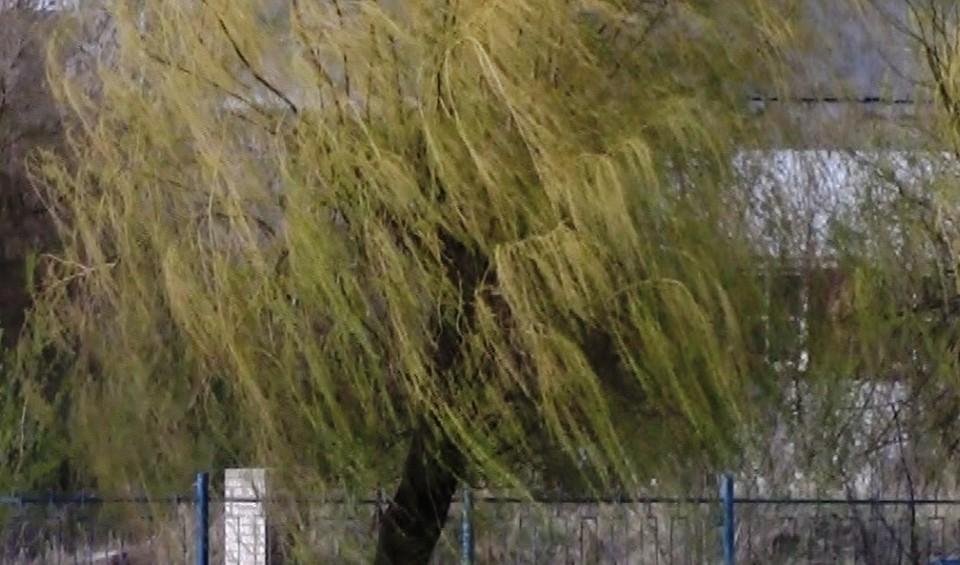 Днем порывы ветра до 15-20-ти метров в секунду.