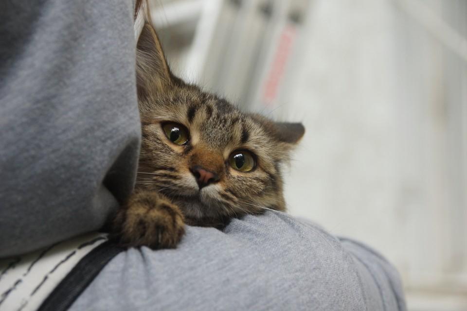 В годы войны многих кошек ждала незавидная судьба...