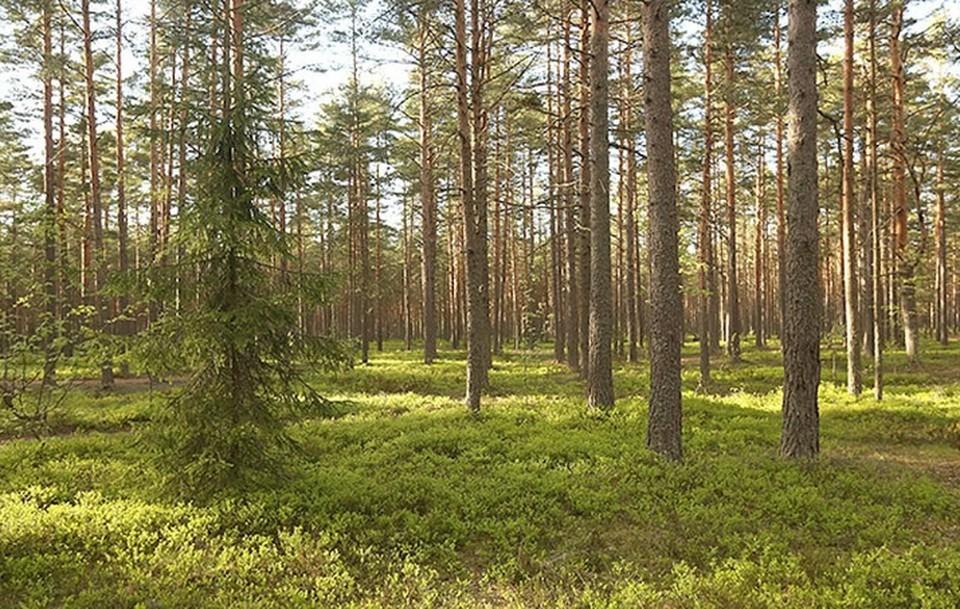 В Пермском крае с 7 июня и до 10 сентября вводится особый противопожарный режим.