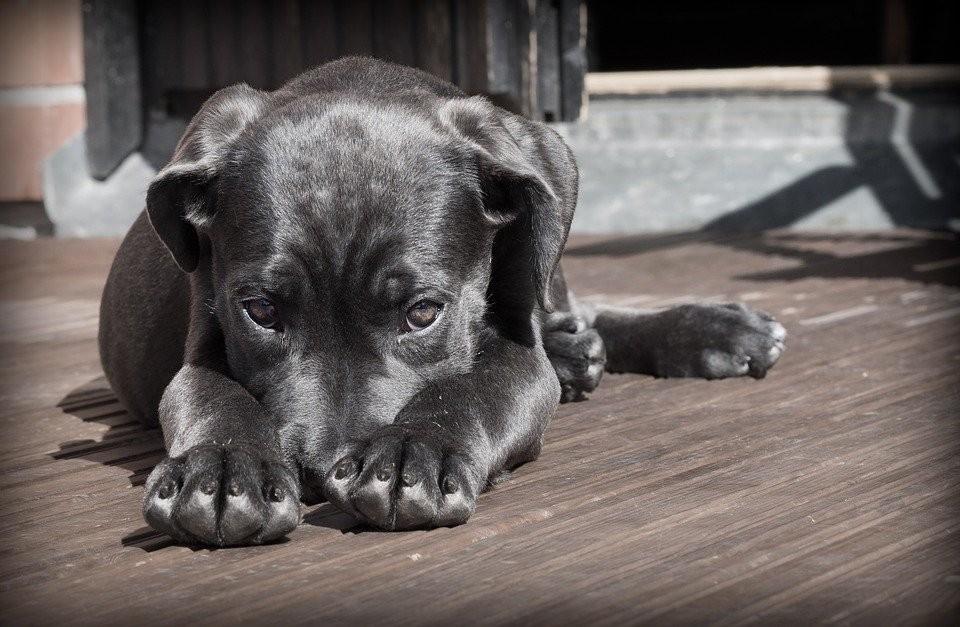 В Приморье держат собаку на балконе. Фото: pixabay.com