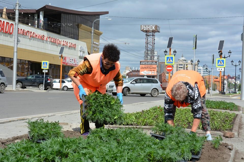 Специалисты начали высаживать растения на клумбах города