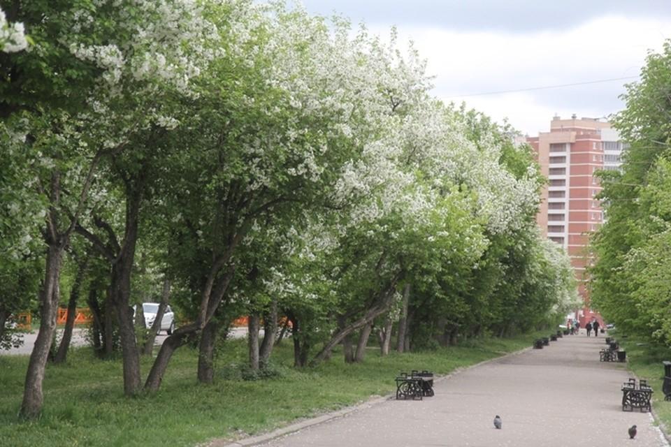Погода в Иркутске: 31 мая в городе переменная облачность