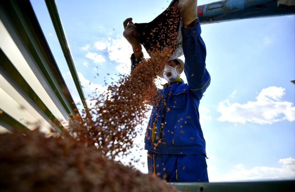 Кампания по посадке овощей и зерновых в Томской области приближается к концу
