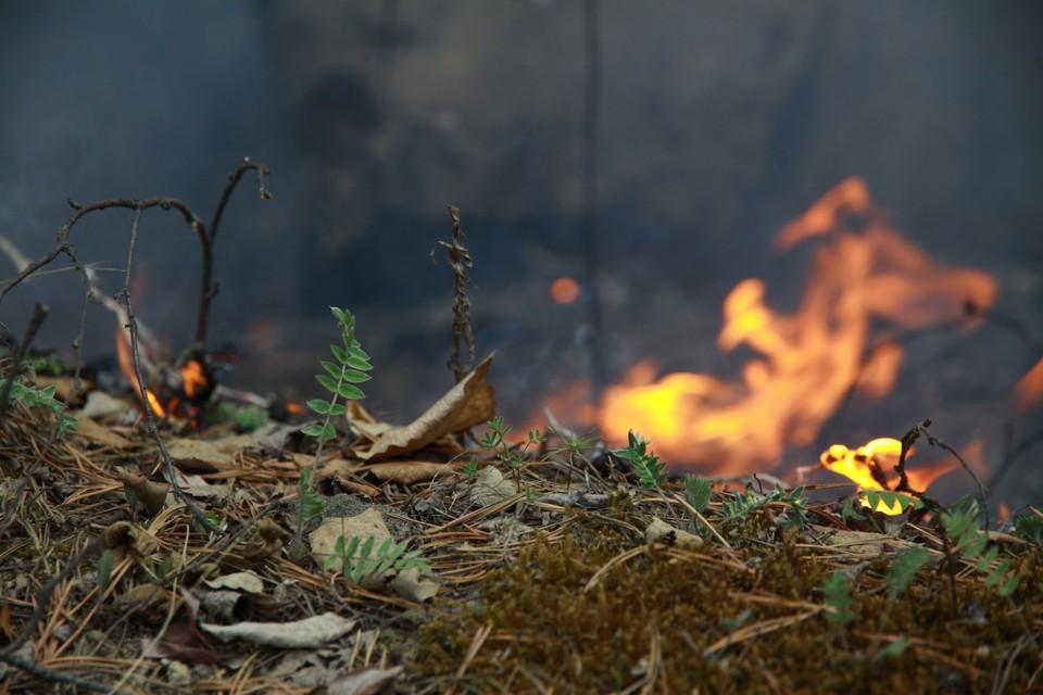 О повышении пожароопасности в лесах Иркутской области предупредили метеорологи