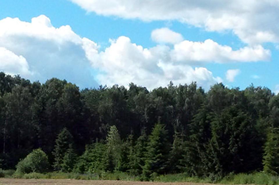 В регионе продлён полный запрет на разжигание какого-либо огня в лесах. Фото: ПТО