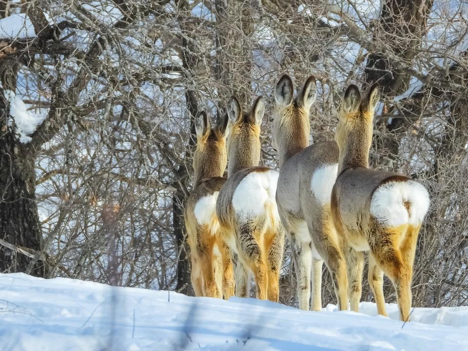 "Фото оренбурженки ""Ушки на макушке"" победило в номинации ""Мир животных"""