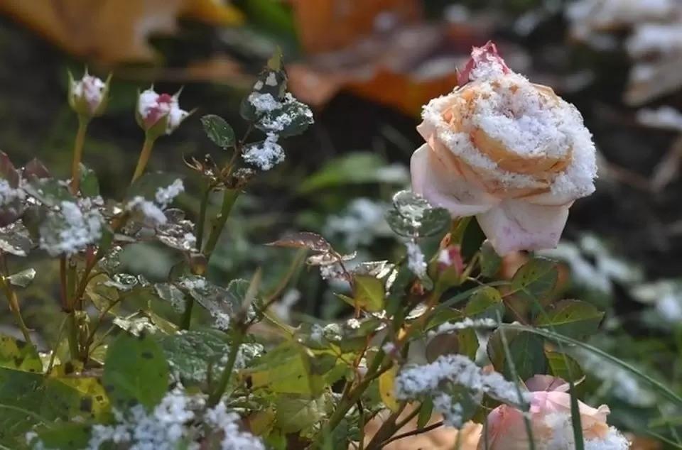 Теплолюбивые растения лучше ночью прикрыть, заморозки могут их погубить