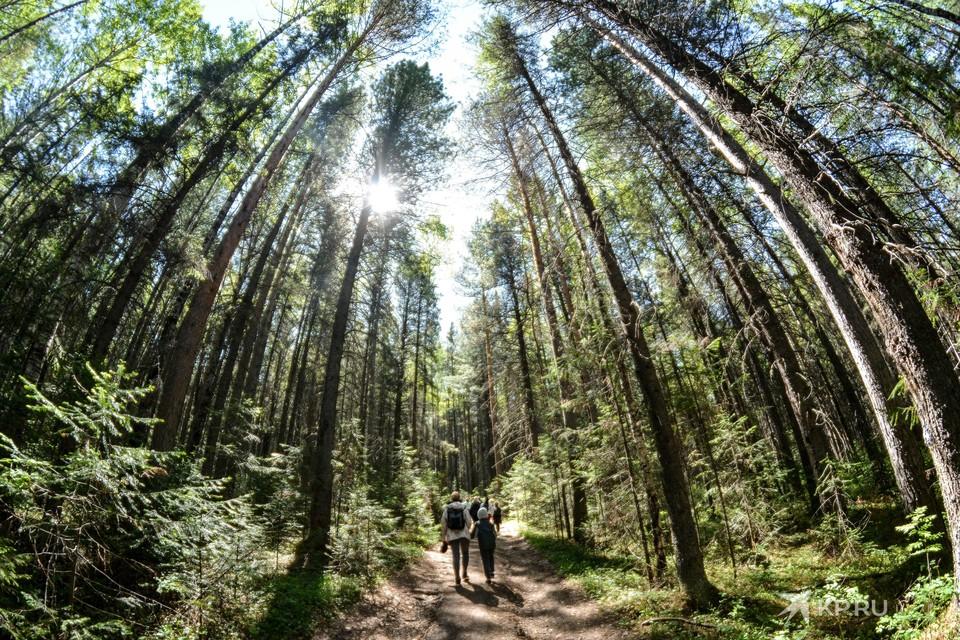 5 и 6 июня в программе много мероприятий: от прогулки по лесу до сплава по реке