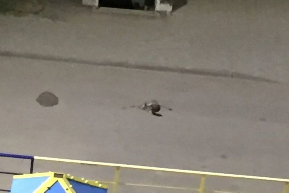 Кошку скинули с шестого этажа. Фото: Оксана Безрека