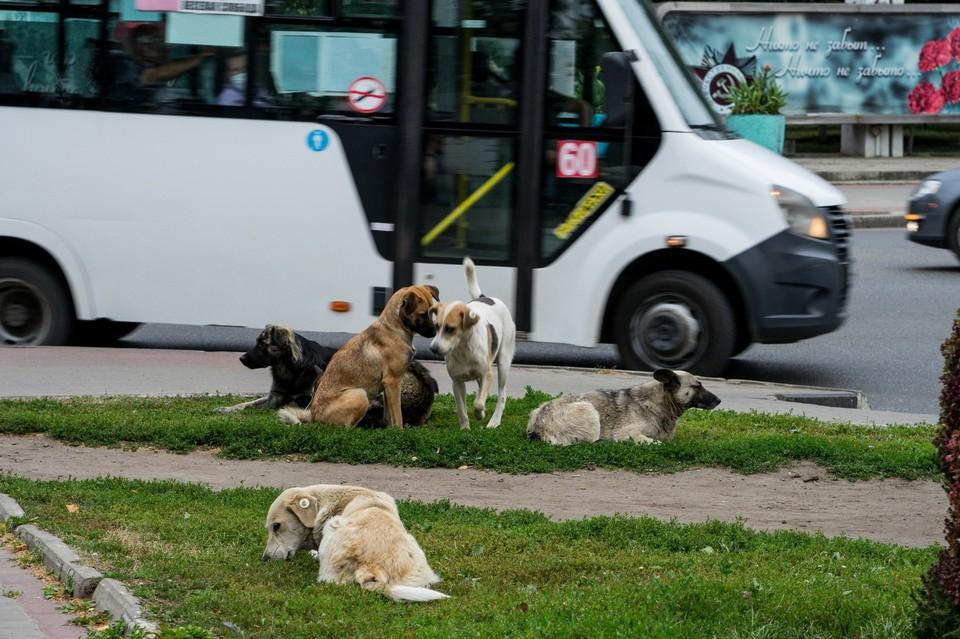 В Орле провели круглый стол по проблеме бездомных собак и кошек
