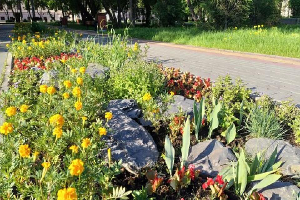 Так выглядит клумба на площади Новособорной, где этим летом будет цвести множество пестрых, ярких цветов. Фото предоставлено пресс-службой мэрии Томска.