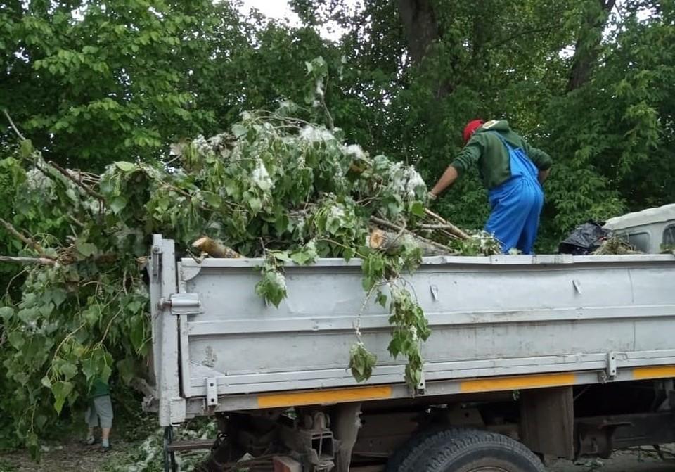 Всего же на сегодняшний день спилено 408 аварийных дерева