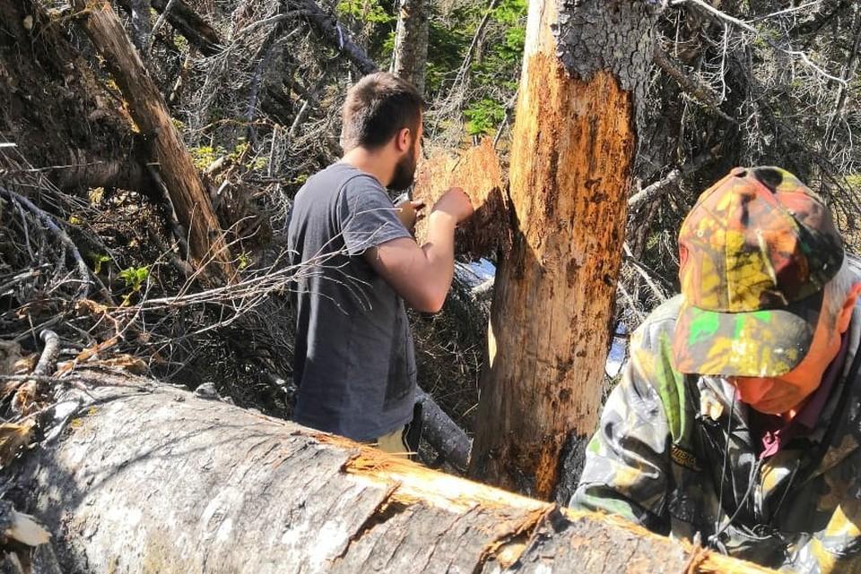 Рабочая группа исследовала массивы в трех районах. Фото: пресс-служба агентства лесного и охотничьего хозяйства Сахалинской области